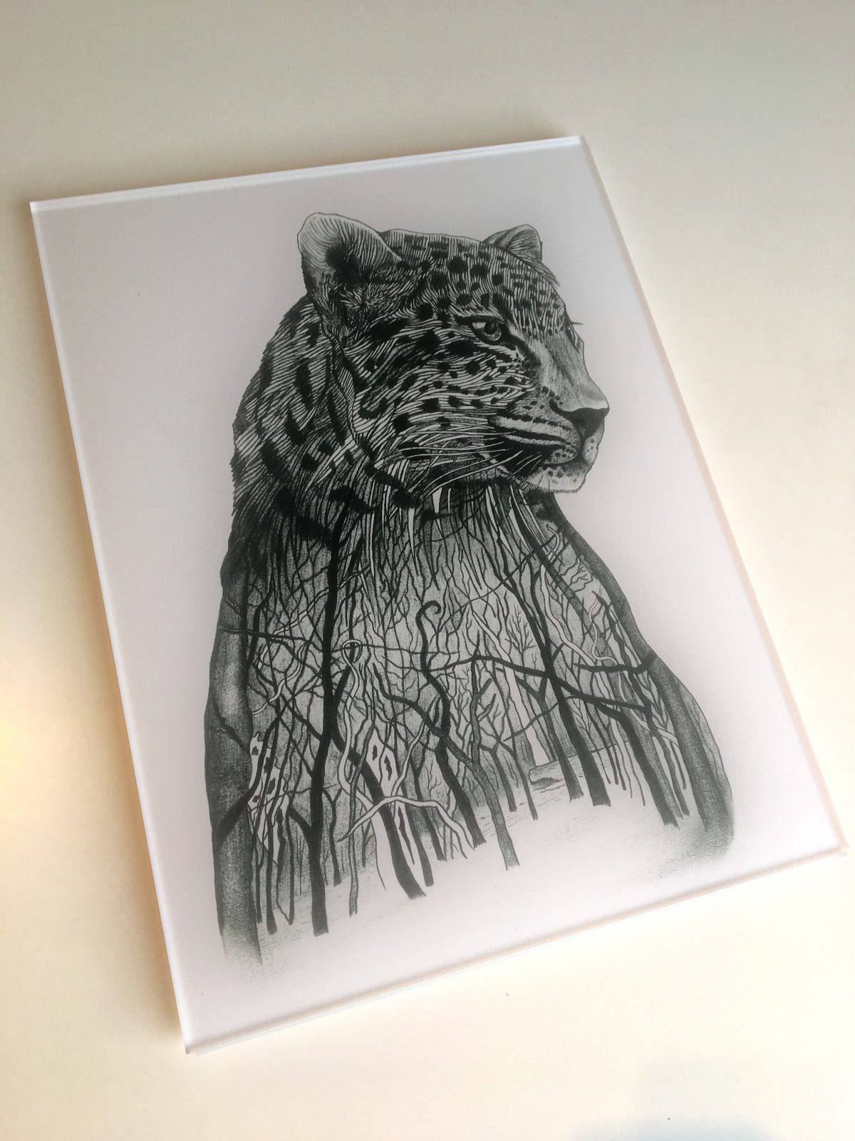 Amur Leopard drawing - limited edition print on acrylic glass | 30 x 40 cm | Edition of 3