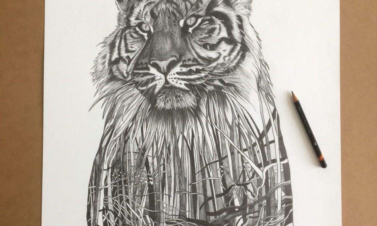 Sumatran tiger drawing by Paul Kingsley Squire