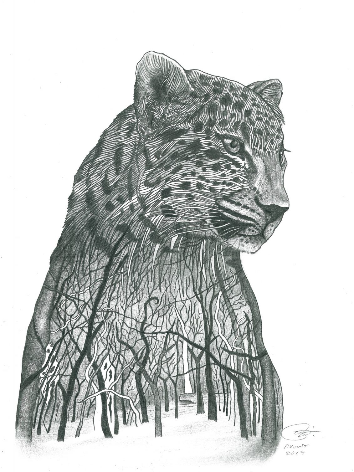 Amur Leopard | 29.4 x 42 cm | Pencil on 200 gsm paper | 2019 - created for Sketch for Survival auction, to raise money and awareness for endangered species across the globe