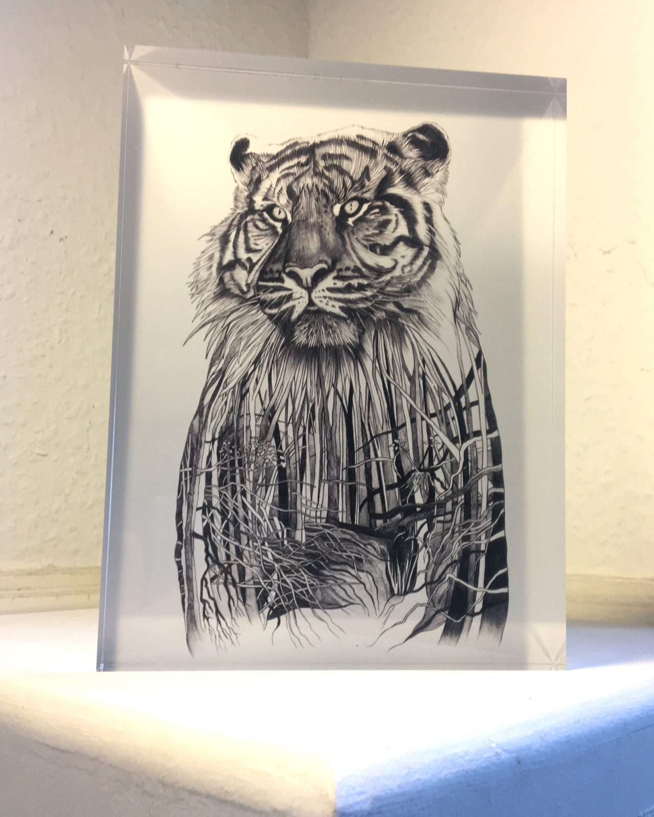Sumatran Tiger - print on acrylic glass block